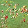 cham_monique_feuilles_automne